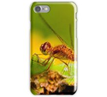 White Faced Meadowhawk Dragonfly iPhone Case/Skin