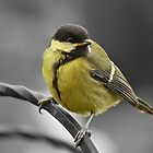 Great Tit by hampshirelady