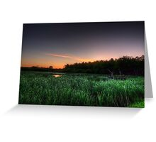 First Ray of Sunlight on Swamp Greeting Card