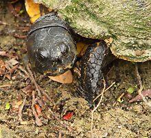 Turtle by Adam Wignall