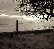 Barbed-Wire Fence in the Snow by Jonathan Rich