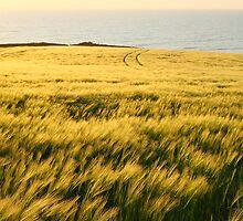 Sea of Grass by Adam Wignall