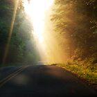 Early morning light by photographyjen