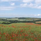 Poppy Panorama by FelicityB