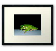 Hanging Out - green tree frog Framed Print