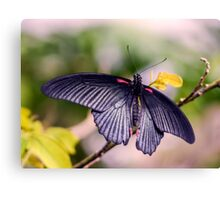 Asian Swallowtail Canvas Print