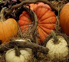 Thanksgiving Pumpkin Patch by Rosemary Sobiera