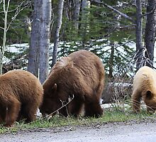 Mother Bear and Cubs by Alyce Taylor