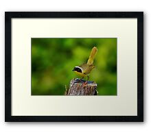 Male Common Yellow Throated Warbler Framed Print