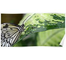 The Smiling Paper Kite Butterfly Poster