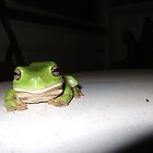 Green Tree Frog on stage by sbyrne