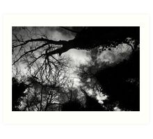 Ominous Trees in Black and White Art Print