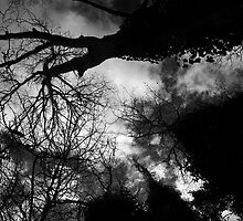 Ominous Trees in Black and White by nwexposure
