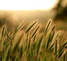 Grassy Plain by Kenneth Pfeifer