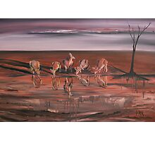 Kangaroos at the Waterhole Photographic Print