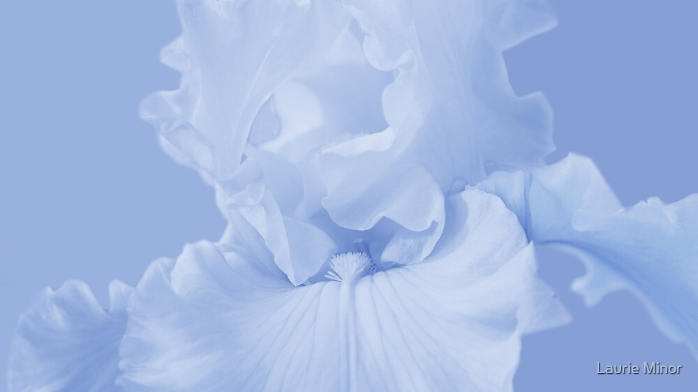 Blue Iris by Laurie Minor
