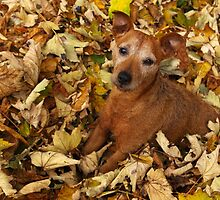 Rustling in the leaves by Fay Freshwater