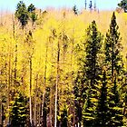 Aspens in the Spring  by Janette  Kimbrough