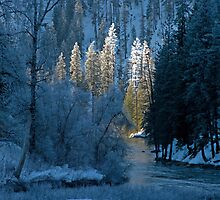 Creekside Winter. by Todd Rollins