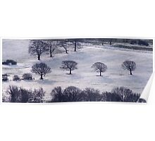 4 Trees in the Snow Poster