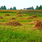 Haystacks in field by Eduard Isakov
