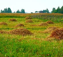 Haystacks in field by Eduard Isakov