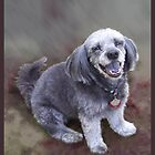 Portrait of a Happy Dog by Ginny Schmidt