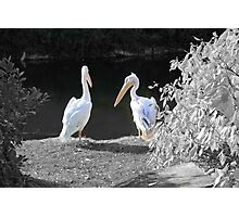 Just the two of us Photographic Print