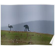 Emus on the Hill Poster