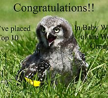 Challenge Banner Design Entry – Baby Wildlife of the World by Mark Hughes