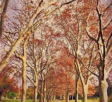 Crispiness - Winter in Adelaide by MooMooMiguelle