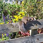 "Squirrel by Scott ""Bubba"" Brookshire"