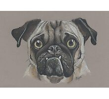 Ozzy the pug. Photographic Print