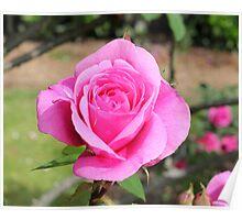Flaural rose Poster
