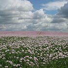 Thundery Poppies by Rachel Tyrrell