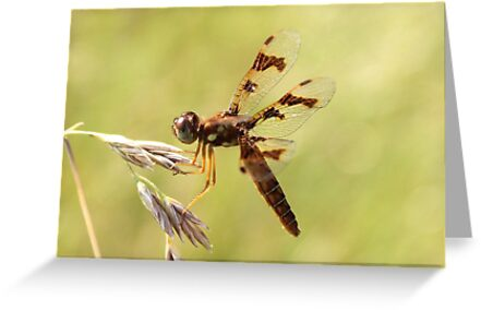 dragonfly by SusieG