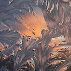 Twilight Of The Ice faries  by robevans