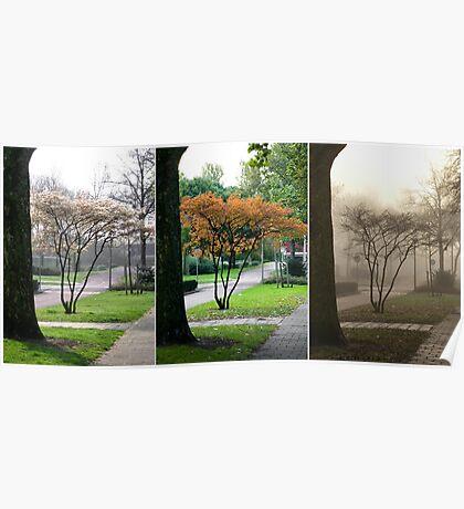 Little Tree... Seasons Change - triptych Poster