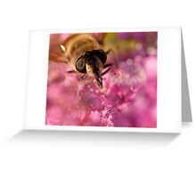 Honey Bee macro Greeting Card