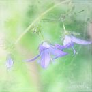 Blue bells by aMOONy