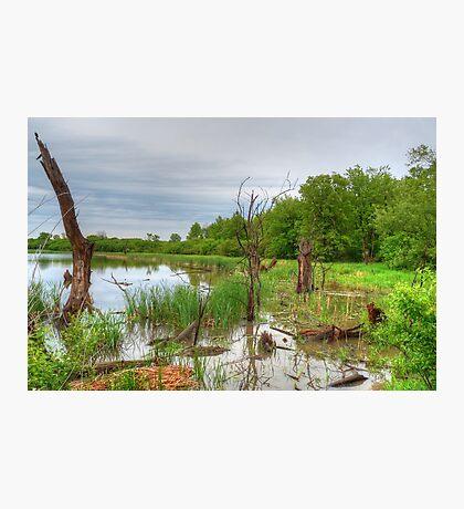 Marsh Mayhem Photographic Print