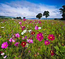 Wild Flowers by Nigel Bryan