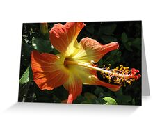 Yellow and Red... Greeting Card