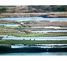 wetland stripes Photographic Print