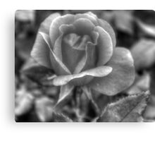 How many petals? Canvas Print