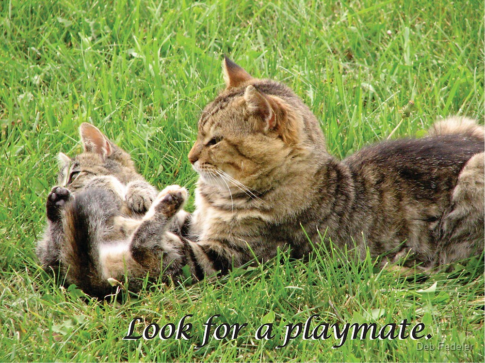 Cats Play - Look for a Playmate by Deb Fedeler