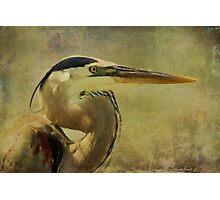 Heron On Texture Photographic Print