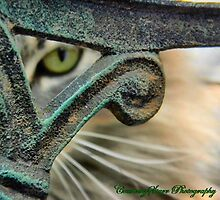 Cat eye by Courtneystarr