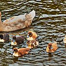 Out With Mum by Eve Parry