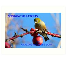 Challenge Banner Entry - Amazing Wildlife Group - Silvereye NZ Art Print